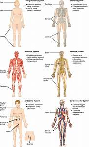 Human Anatomy And Physiology Online Course