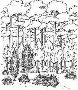 Ausmalbilder Wald Kostenlos Malvorlagen Zum Ausdrucken