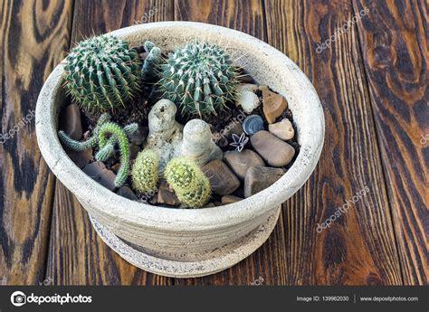madera de cactus peque 241 o jard 237 n miniatura plantas