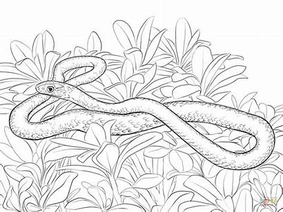 Snake Coloring Pages Racer Mamba Snakes Printable