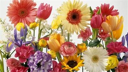 Spring Desktop Summer Background Wallpapers Flowers Wallpapersafari