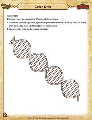 color dna printable 7th grade science worksheet school of dragons