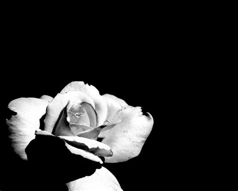 Black And White Images Of Flowers 20 Hd Wallpaper