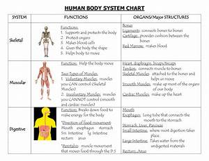 Human Organ Systems Diagram - Human Anatomy Diagram