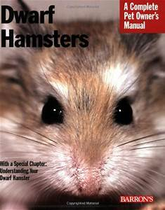 Siberian Hamster 101