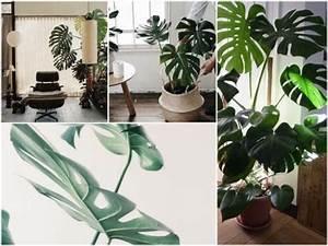 Plante Tropicale D Intérieur : bien choisir sa plante d int rieur ~ Melissatoandfro.com Idées de Décoration