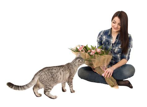 Schleierkraut » Giftig Für Katzen?