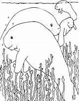 Manatee Coloring Pages Animals Manatees Sheets Printable Animal Sea Colouring Water Education Cow Template Plants Fun Wpclipart Print Formats Mammals sketch template