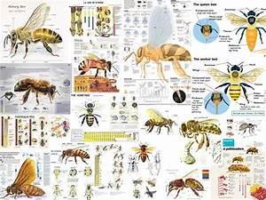 Master Beekeeper Program