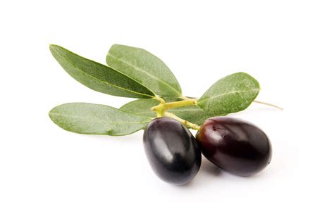 olive and olive leaf oleuropein 20 40 hydroxytyrosol10 20