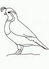 Quail Outline Coloring Pages Bird Clipart California Quails Desert Mosaic Clip Colorluna Colouring Valley Drawings Sketch Craft Crafts Qual Preschool sketch template