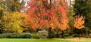 Kleiner Baum Garten : hausb ume ~ Lizthompson.info Haus und Dekorationen