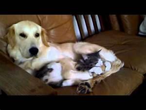 Haustiere Für Die Wohnung : lustige katzen zum totlachen xd video ~ Frokenaadalensverden.com Haus und Dekorationen