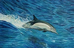 Schöne Delfin Bilder : bild delfin nass ozean meer von olaf plantener bei kunstnet ~ Frokenaadalensverden.com Haus und Dekorationen