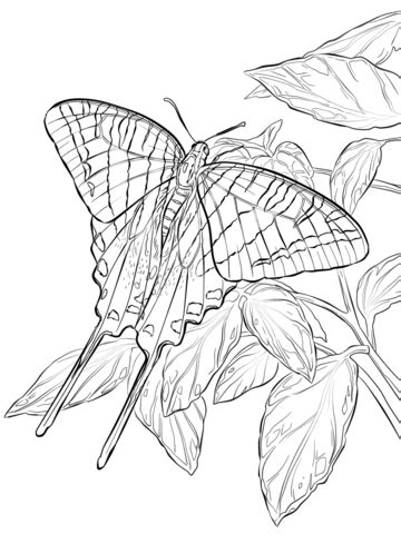zebra swallowtail butterfly coloring page  printable