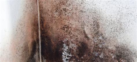 clean black mold   walls doityourselfcom