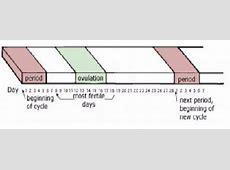Menstrual Cycle Pregnancy Risk