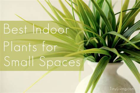 indoor plants  small spaces tiny living