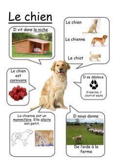fiche sur le chien fiche p 233 dagogique animaux