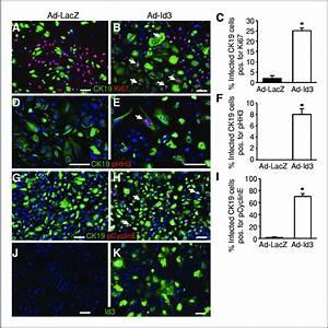 Id3 Mediates Cell