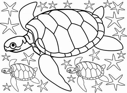 Turtles Colouring Starfish Beach Summer Seaside Printables