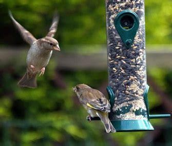 stop birds  flying   windows