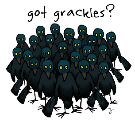 birder s world field of view how to get rid of grackles