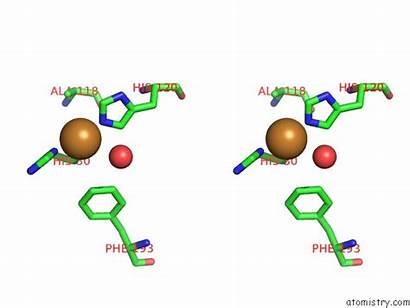 Copper Cu Pdb Aa10 Polysaccharide Lpmo Monooxygenase
