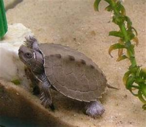 Map Turtles on Pinterest | Turtles, Maps and Mississippi