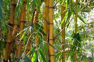 Wie Schnell Wächst Bambus : bambus rhizomsperre test und preisvergleich handtuchgarten ~ Frokenaadalensverden.com Haus und Dekorationen