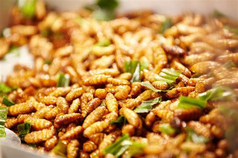 cuisine insectes comestibles insectes comestibles grillés découvrez les sachets d