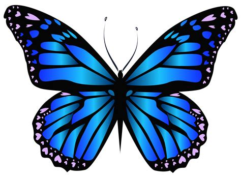 Butterfly High Resolution Clip Art
