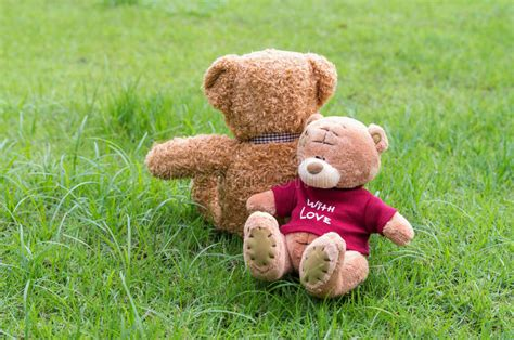 Brown Teddy Bear Color