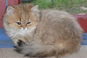 Katze Kotzt Viel : bild 1 aus beitrag paloma ein winzling erobert alle herzen ~ Frokenaadalensverden.com Haus und Dekorationen