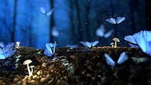 beautiful butterfly blur 4k hd wallpapers hd wallpapers
