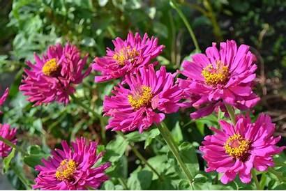 Desert Arizona Flowers Plants Floriculture Beauty Services
