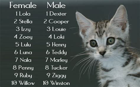 names for kittens do you know the meaning of your girl kitten names check out this big list cats pinterest