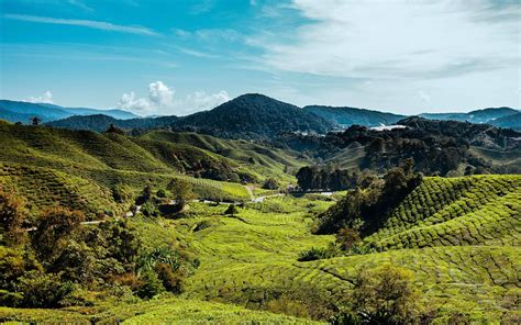 malaysia cameron highlands hills meadow preview
