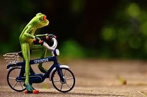 Frosch Bilder Lustig : kostenloses foto frosch fahrrad lustig niedlich kostenloses bild auf pixabay 1701133 ~ Whattoseeinmadrid.com Haus und Dekorationen