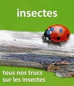Anti Fourmi Naturel : anti fourmi r pulsif naturel efficace jardins truc ~ Carolinahurricanesstore.com Idées de Décoration
