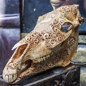 Hand Carved Buddha Horse Skull Real Mule   Animal Skull