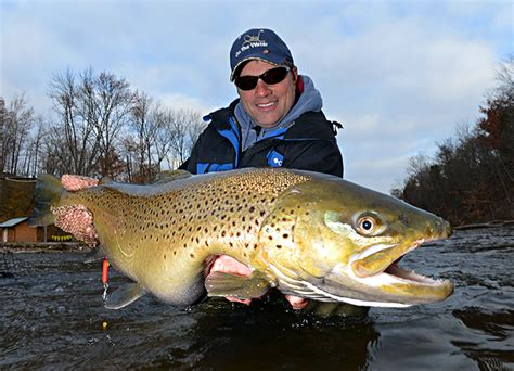 oak orchard brown trout   water