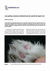 Plante Oreille De Lapin : pdf les pattes bonnes indicatrices de sant du lapin 1 ~ Melissatoandfro.com Idées de Décoration