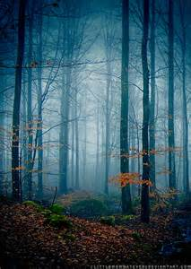 Forest Landscape Photography