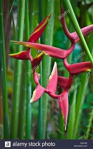 Tropische Pflanzen Kaufen : exotische tropische pflanzen bl hen im botanischen garten ubud bali indonesien stockfoto ~ Watch28wear.com Haus und Dekorationen