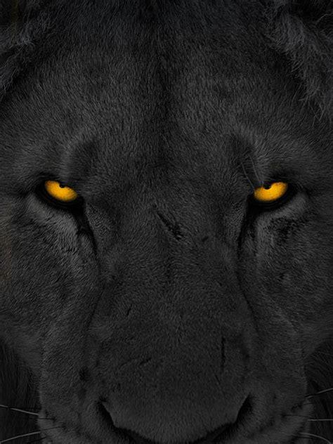 chase  lion  mark batterson waterbrook multnomah