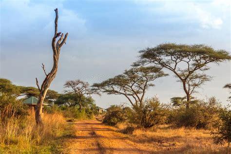 Serengeti National Park In Northwest Tanzania Stock Image
