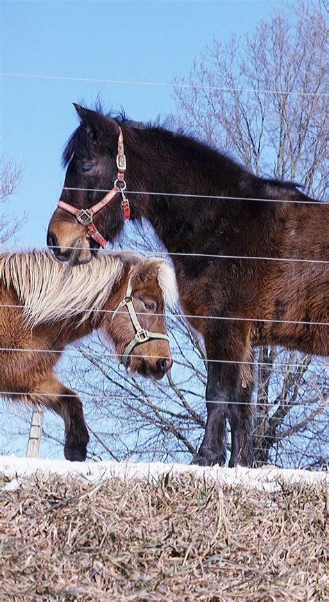 horses tame horse animals horsing around uploaded