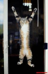 cat hanging hang in there d cats hq free pictures of