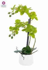 Künstliche Orchideen Im Topf : k nstliches orchideen gesteck im topf 52 cm gr n ~ Watch28wear.com Haus und Dekorationen